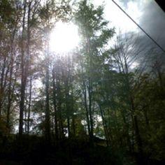 Trees through train window