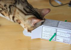 Homemade Toy - Mini Box Challenge by emeadow, via Flickr Homemade Cat Toys, Small Boxes, Cat Stuff, Baby Toys, Fur Babies, Helpful Hints, Challenges, Kitty, Pets