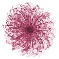 Radiografías de Flores