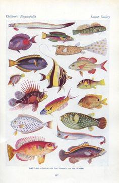 Vintage Fish Illustration — Tropical Fish of the Ocean Art Et Illustration, Botanical Illustration, Illustration Botanique Vintage, Scientific Drawing, Poster Art, Desenho Tattoo, Fish Print, Vintage Fishing, Tropical Fish