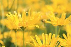 Yellow Heaven - OGQ Backgrounds HD
