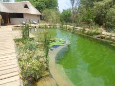 Green natural swimming pool