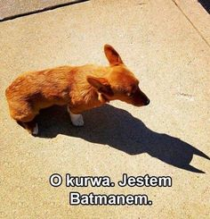 Very interesting post: TOP 38 Funny Dogs Pictures.сom lot of interesting things on Funny Dog. Animal Memes, Funny Animals, Cute Animals, Animal Pictures, Gotham City, Funny Dog Pictures, Funny Images, Practical Jokes, Dog Memes