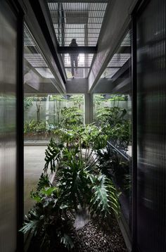 An L-shaped opening has then been made in the ceiling at the rear of the basement, topped with gridded metal sheeting so that air can circulate from the ground floor above. The area directly beneath the opening has been fronted with glass to form an indoor courtyard.  Inside, it's filled with an array of leafy green plants and a small chinaberry tree. Indoor Courtyard, Basement Plans, Terrazzo Flooring, Grey Room, Dark Interiors, Pink Houses, Apartment Interior, Architecture, Ground Floor