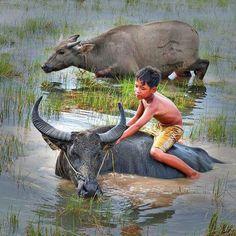 Boy on buffalo, nomally seen in rural areas of Vietnam Art Village, Indian Village, Laos, Vietnam Voyage, Vietnam Travel, Village Photography, Children Photography, Beautiful Vietnam, Water Buffalo