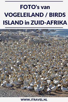 Op Vogeleiland/Birds Island heb je de kans om de blauwogige jan-van-genten van dichtbij te zien. Vogeleiland is één van de slechts zes locaties wereldwijd waar deze jan-van-genten broeden. En het is de enige broedplaats die gemakkelijk toegankelijk is voor het publiek. Mijn foto's van Vogeleiland zie je hier. Kijk je mee? #vogeleiland #zuidafrika #jtravel #jtravelblog #fotos