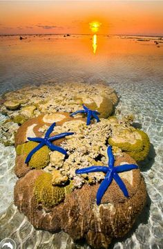 Australia. Starfish on Reef at Lady Elliot Island Eco Resort, southern tip Great Barrier reef. Photo by Darran Leal via World Photo Adventures.