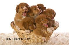 Riddy Tollers 2011-39 copy.jpg (460×306)