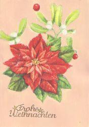 Weihnachtskarte-Weihnachtsstern-und-wei-e-Beeren