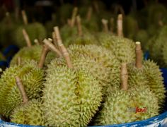 cool Top 10 Exotic Foods You Probably Haven\'t Tried