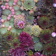 Puno vrsta malih kaktusa u skupini u botaničkom vrtu u Zadru