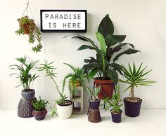 paradise is here: a giveaway from skinny laminx!