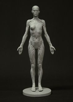 Sculpt, draw and understand the fundamental shapes and volumes that build up the female body with 3dtotal's female full-écorché figure... #anatomy #anatomyreference