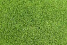 Map cỏ