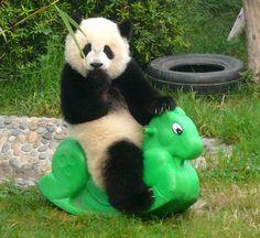 Детский сад для панд.