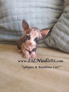 Newborn Bambino Girl Kitten