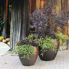 8 fall container gardens | Lime and chocolate | Sunset.com
