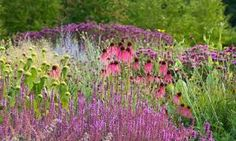Image result for Carex planting combinations