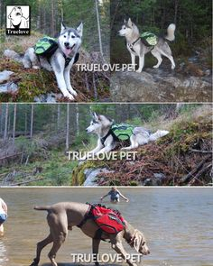 Truelove Two Uses Dog Backpack Harness Waterproof Outdoor Camping Training Hiking Multi-Day Backcountry Pet Backpack For Dogs Dog Backpack, Animals Of The World, Outdoor Camping, Husky, Backpacks, Pets, Backpack, Outdoor Living, Camping