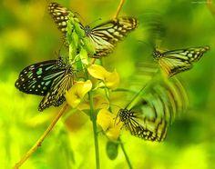 Grafika, Motyle, Kwiaty