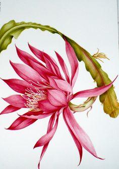 botanical illustrations by Donnett Vanek at Coroflot.com