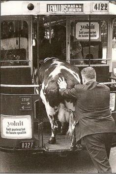 """""""Empezar la semana con una hora menos de sueño es como intentar meter una vaca en el tranvía"""" Lunes 31 de marzo de 2014 Robert Doisneau"""