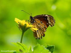 P201409-14 Close Up, Nature, Naturaleza, Nature Illustration, Off Grid, Natural