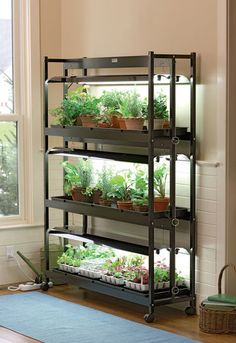 Indoor vegetable garden tips starting vegetable gardens for Garden supply burlington vermont