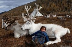 Nomad boy in Mongolia sleeping with the reindeers
