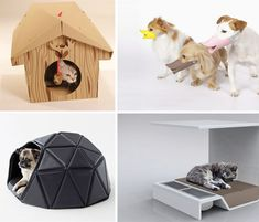Modern Pet Products Main