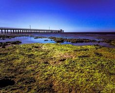 Another shot from Point Lonsdale on the Bellarine Peninsula Victoria. #bellarinepeninsula #bellarine #pointlonsdale #pier #victoria #ocean #seaside #beach #geelong #wandervictoria #tourismvictoria #australiagram #australia #australia_shotz by noeliner_photography http://ift.tt/1JO3Y6G