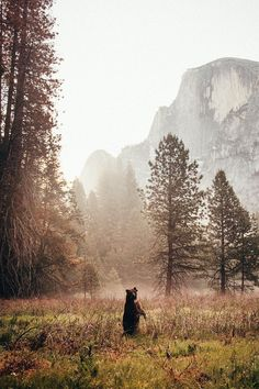 "lsleofskye: ""Yosemite National Park """