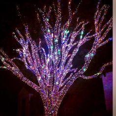 Highland Park Christmas Lights