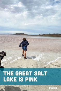 The Great Salt Lake is Pink | UTAWESOME Stuff To Do, Things To Do, Pink Lake, Like Crazy, Walk Out, We Run, Utah, Salt, Amazing