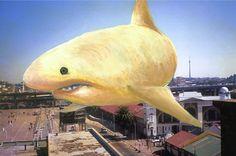 A loan shark - Diana Loan Shark, Diana, Fish, Pets, Animals, Animales, Animaux, Pisces, Animal