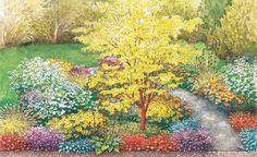 Bei der Herbstfärbung des Phönix-Ahorns entsteht ein schöner Blatt-Rinde-Kontrast