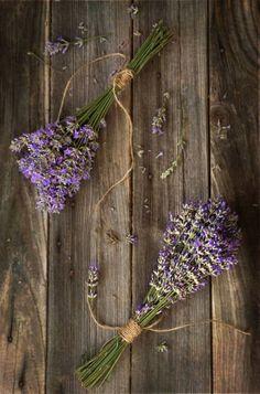 Rurally yours, . Lavender Cottage, Lavender Garden, Lavender Blue, Lavender Fields, Lavender Flowers, Dried Flowers, Drying Lavender, French Lavender, Malva