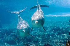 dolphins ♥