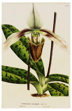 Tropical   Botanical, C. 1860 | 5-Minute Escape | One Kings Lane