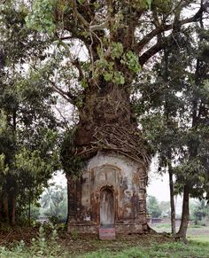 Banyan Tree with an attached 16th Century Terracotta Temple, Antpur, West Bengal, India photo by Laura McPhee
