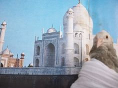 Cutu en el Taj Mahal