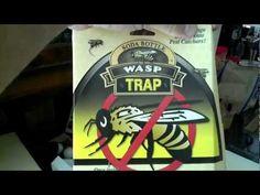 Wasp Trap FAIL