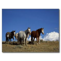 @@@Karri Best price          Standing Horses in Western Pasture Postcard           Standing Horses in Western Pasture Postcard you will get best price offer lowest prices or diccount couponeReview          Standing Horses in Western Pasture Postcard Online Secure Check out Quick and Easy...Cleck Hot Deals >>> http://www.zazzle.com/standing_horses_in_western_pasture_postcard-239915802839027918?rf=238627982471231924&zbar=1&tc=terrest