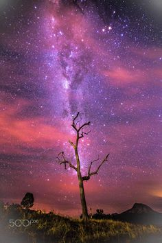 Lake Moogerah, Tree Borax - Milky Way - Lake Moogerah, Tree Borax, by Aaniko…