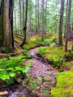 Inland temperate Rainforest, BC Musings...By Mix Hart