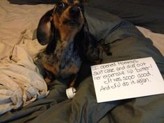dachshund memes | Posted on December 18, 2012 by lizandrio Leave a comment