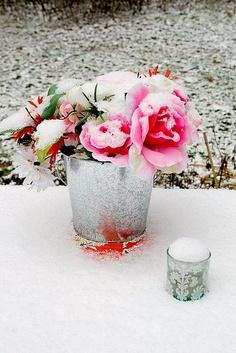 Snow flowers.