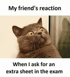 Me after exam results Check out these funny exam memes is part of Exam quotes funny - Todays Topic How to get rid of exam stress Answer Fk this shit and check out these few images which Memes Humor, Funny Minion Memes, Funny School Jokes, Best Funny Jokes, Crazy Funny Memes, Really Funny Memes, School Memes, Funny Shit, Funny Relatable Memes