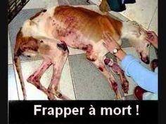N'abandonnez JAMAIS un animal et ne le MALTRAITE JAMAIS!!!!!Aimez le du plus profond de votre coeur ❤️ !!!