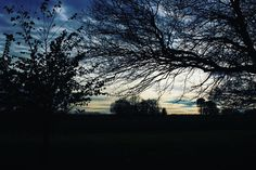 I'm back with a kind of poem I wrote late last year:  The sky over the park is framed by naked trees standing stark to attention upturned as if a black network of nerves has taken root against the dull skies. In the distance the accordion man has stopped playing Christmas tunes in his merry discordance to take lunch.  I sit on a bench just to listen to drown out the sound of my internal eternal monologue; to listen to the world beyond my own.  Birdsong. The chattering magpie the pretty tit…